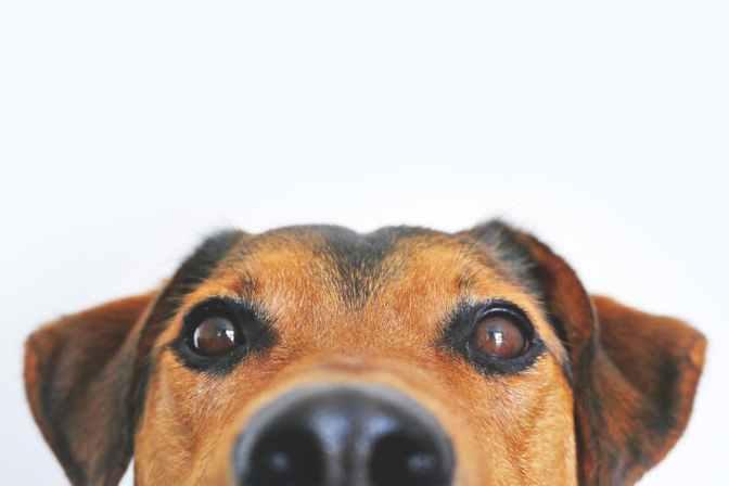 A repercussão do resgate de 135 cães pelo Instituto Luisa Mell
