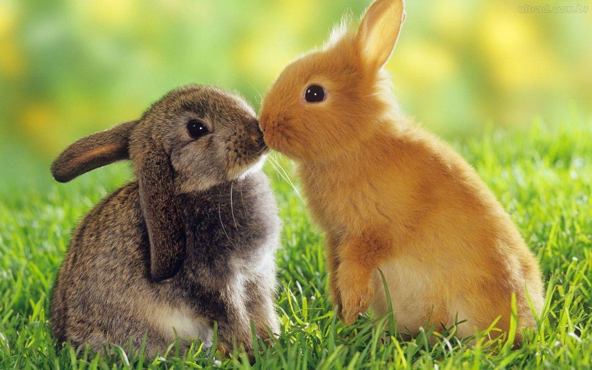 A diferença de cosméticos veganos e cruelty free